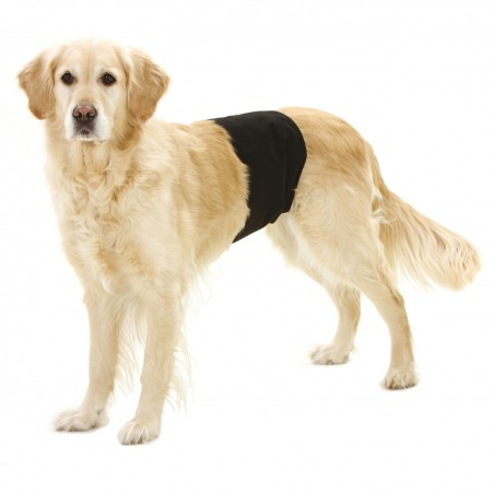 Bandeau anti-pipi pour chien mâle