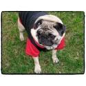 Doudoune noire capuche rouge pour chien