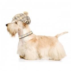 Collier Tartan et cuir marron pour chien