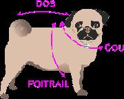 croquis comment mesurer votre chien