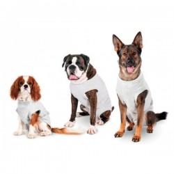 Body de soin gris clair pour chien