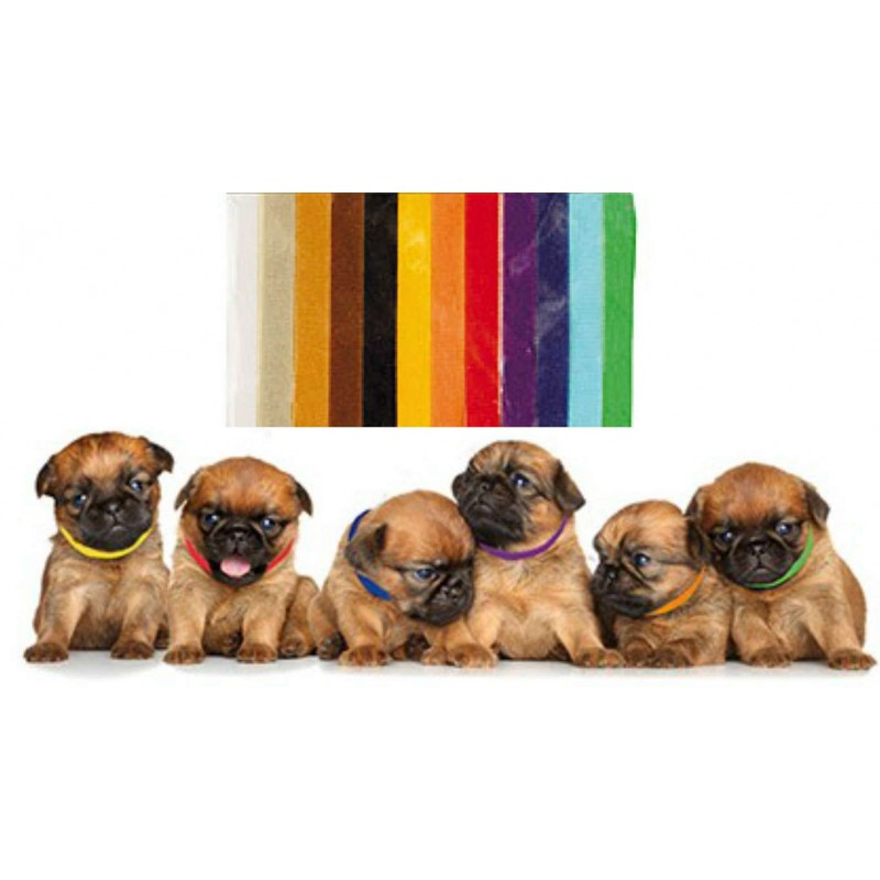 colliers identification naissance velcro chiot chat