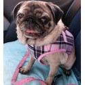 Harnais veste en tissu British beige pour chien
