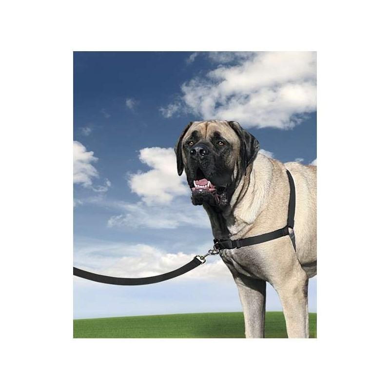 Harnais Easywalk + laisse pour chien