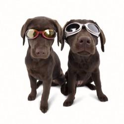 Lunettes de soleil Doggles pour chien