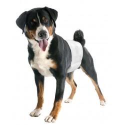 Bandeaux d'incontinence jetables pour chien