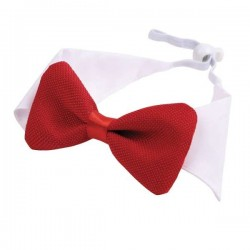 Col blanc noeud papillon rouge pour chien et chat